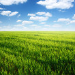 Stock Photo: Nature background, spring day... field of green grass and cloudy sky
