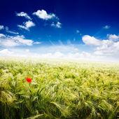 Dreamscape 1, jarní krajina - pšeničné pole a zamračená obloha — Stock fotografie