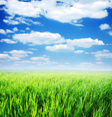 Spring morning... field of green grass and blue cloudy sky — Foto de Stock