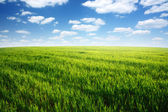 Nature background, spring day... field of green grass and cloudy sky — Stock Photo