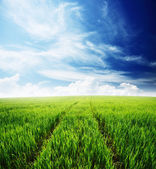 Nature background, spring morning... field of green grass and cloudy sky — Stock Photo