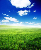 Spring morning... field of green grass and blue cloudy sky — Stock Photo