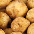 Young raw potato as background — 图库照片 #3133314