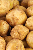 Young raw potato as background — Stock Photo