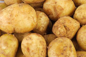 Young raw potato as background — Stockfoto
