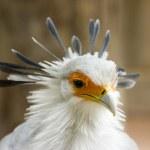 Tropical bird — Stock Photo #3045201