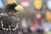 Majestic eagle — Stock Photo