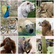 Wild animals collage — Stock Photo