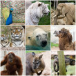 Stock Photo: Wild animals collage