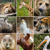 Animal collage — Stock Photo