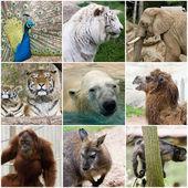 Wild animals collage — Stock Photo