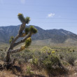 california desert — Stock Photo