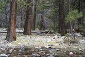 Yosemite wald — Stockfoto