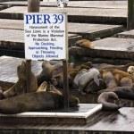 Pier 39 — Stock Photo #3583646
