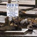 Pier 39 — Stock Photo