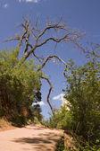 Zion Canyon National Park — Stock Photo