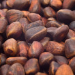 Pile of cedar nut — Stock Photo #2817562