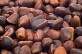 A pile of cedar nut — Stock Photo