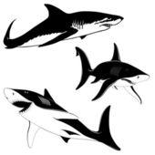 Set of three sharks — Stock Vector
