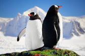 Two penguins dreaming — Fotografia Stock