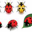 Stock Vector: Ladybugs