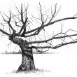Pencil Drawing of Gnarled Old Tree - Stock Photo