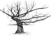 Pencil Drawing of Gnarled Old Tree — Stock Photo