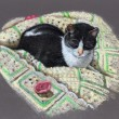 Color Pencil Drawing of Cat on Afghan — Stock Photo #3234296