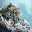 A jaguar is in the Moscow zoo - Stock Photo