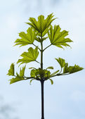 New leaf on a branch — Stock Photo