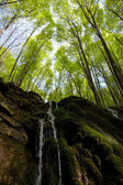 Waterfall in beech forest — Stock Photo