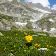 Yellow flower in a high mountains - Stock Photo