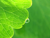Drop of water on a green leaf — Stock Photo