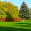 Morning autumn landscape - Stock Photo