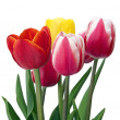 Colorful tulips bouquet - Stock Photo