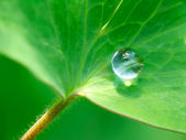 Drop of rain on a green leaf — Stock Photo