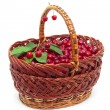 Basket with ripe cherries isolated on white — Foto Stock