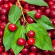 Ripe cherries in the basket background — Stock Photo
