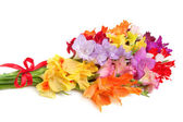Bouquet of colored gladioli isolated on white — Stok fotoğraf
