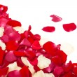 Red and white rose petals — Stock Photo