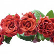 Arches of roses — Stock Photo