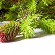 Pine cones with branch - Stock Photo