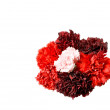 Carnations — Stock Photo #3738609
