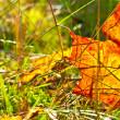 Autumn orange leaf — Stock Photo