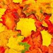 Autumn leaves background - Stok fotoraf