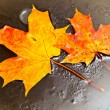 Stock Photo: Maple leaves in ice