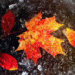 Royalty-Free Stock Photo: Autumn leaves