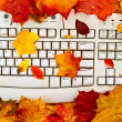 Stock Photo: Autumn keyboard