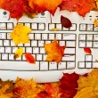 Autumn keyboard — 图库照片
