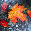 Frozen autumn leaves - Stock Photo